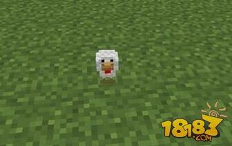 我的世界友好生物介绍--鸡