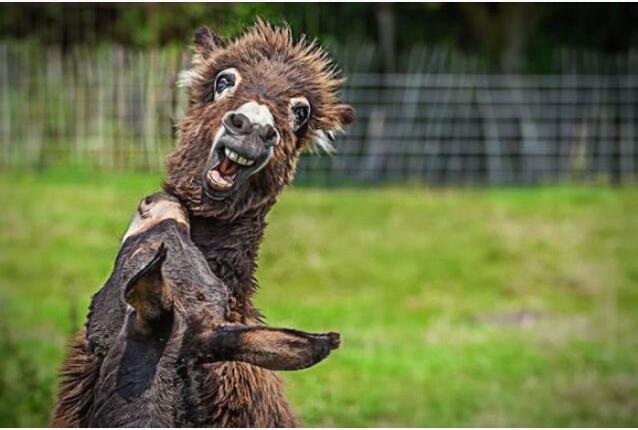 动物界搞笑明星 滑稽动物另类趣事