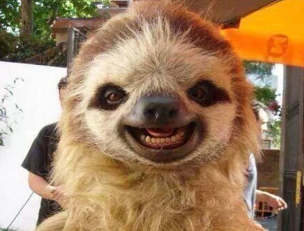 你没见过的动物笑脸