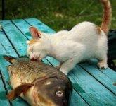 搞笑动物世界内心独白