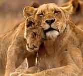 动物各种秀恩爱狂虐人